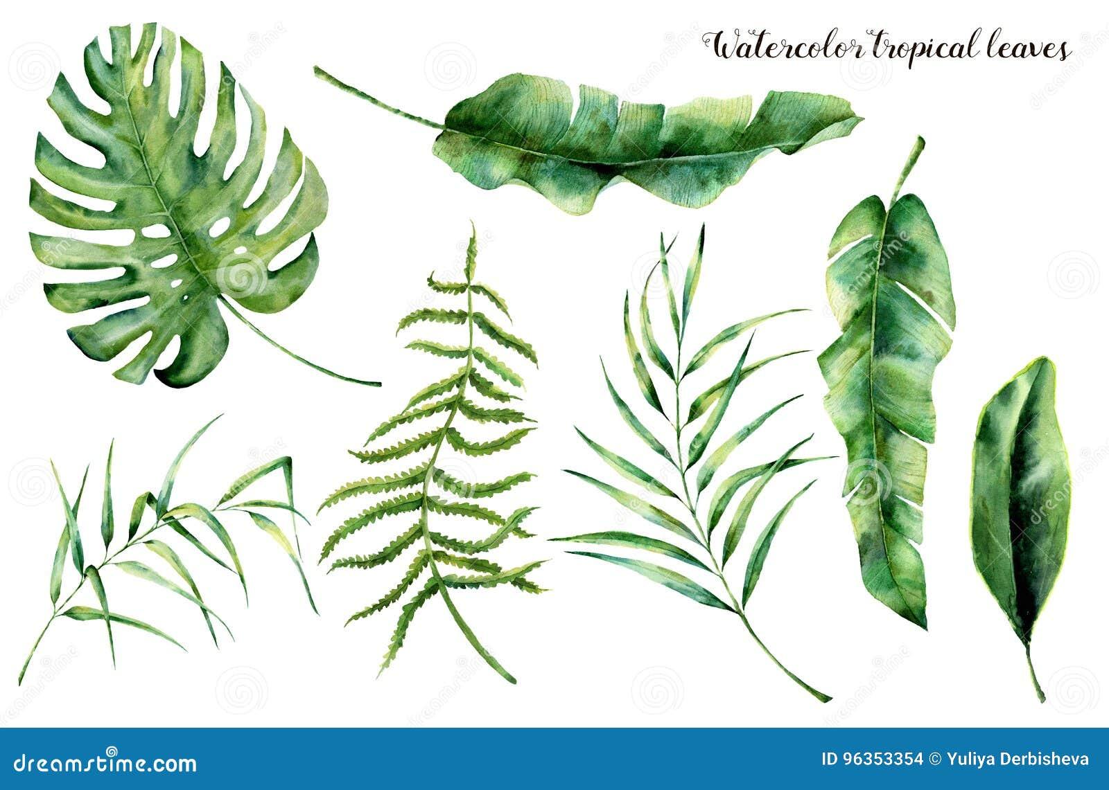Aquarellsatz mit tropischen Blättern Handgemalte Palmenniederlassung, -farn und -blatt der Magnolie Tropische Anlage lokalisiert