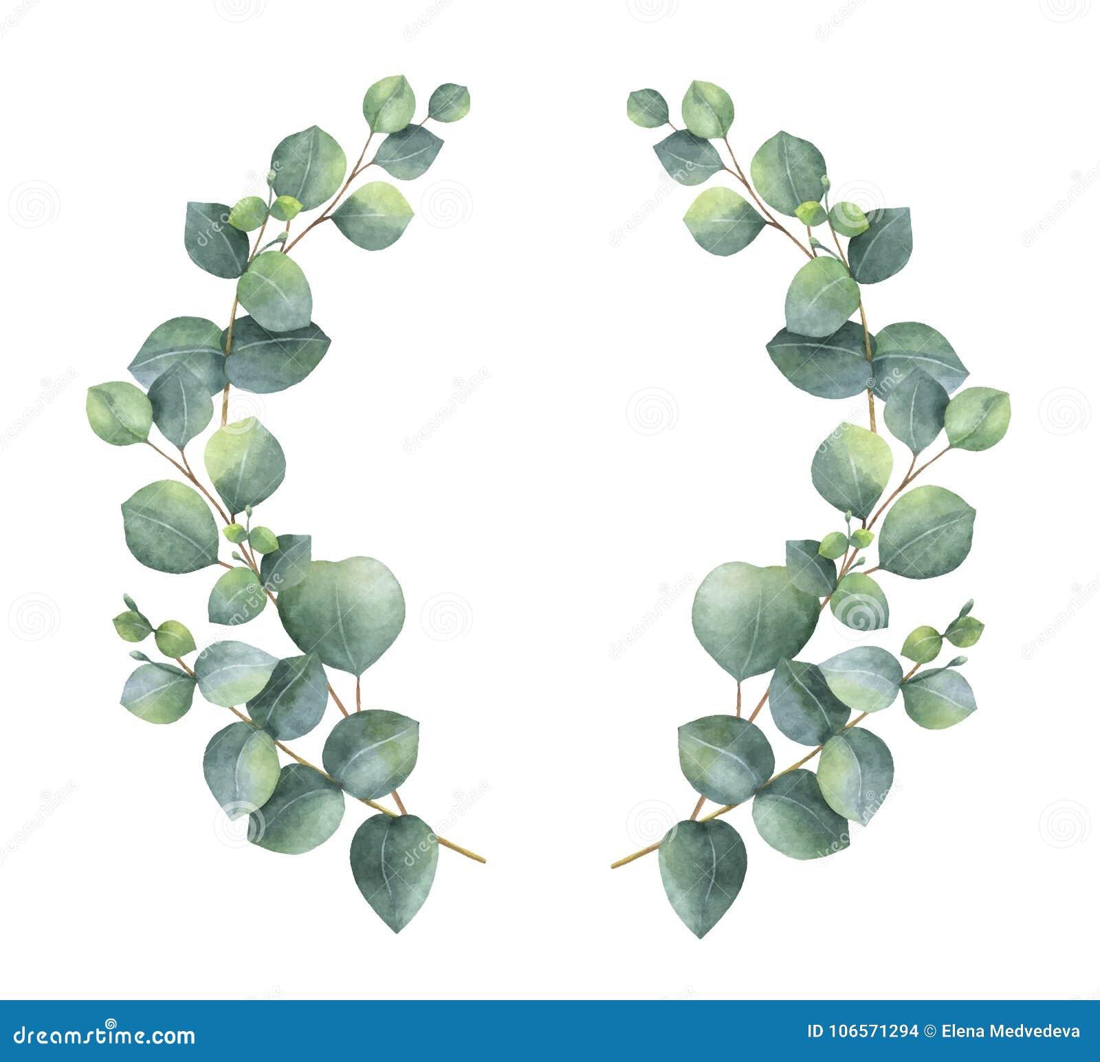 Aquarellvektorkranz mit Eukalyptus des silbernen Dollars verlässt und verzweigt sich