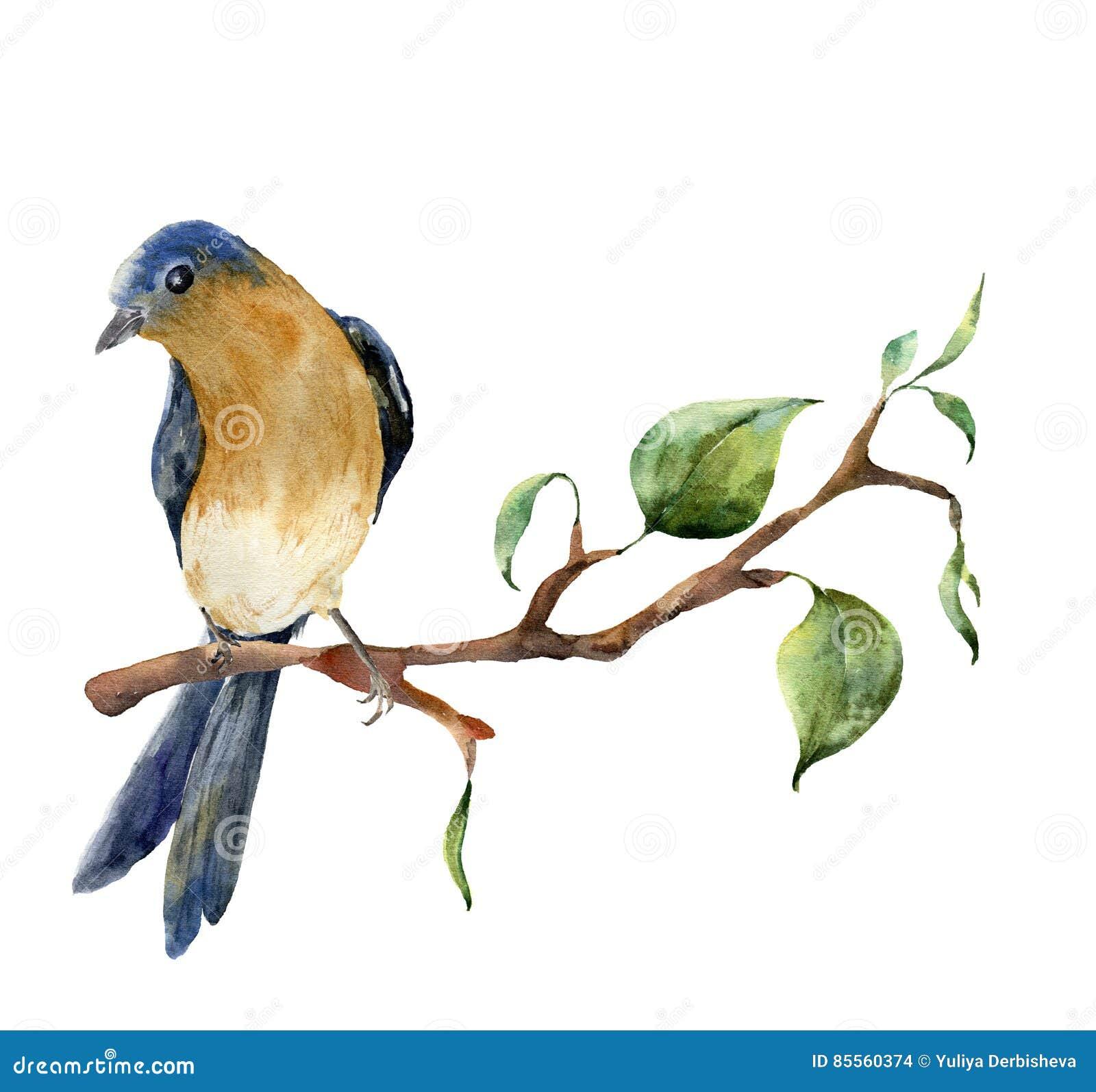 Aquarellvogel, der auf Baumast mit Blättern sitzt Handgemalte Frühlingsillustration mit Rotkehlchenrotkehlchen an lokalisiert