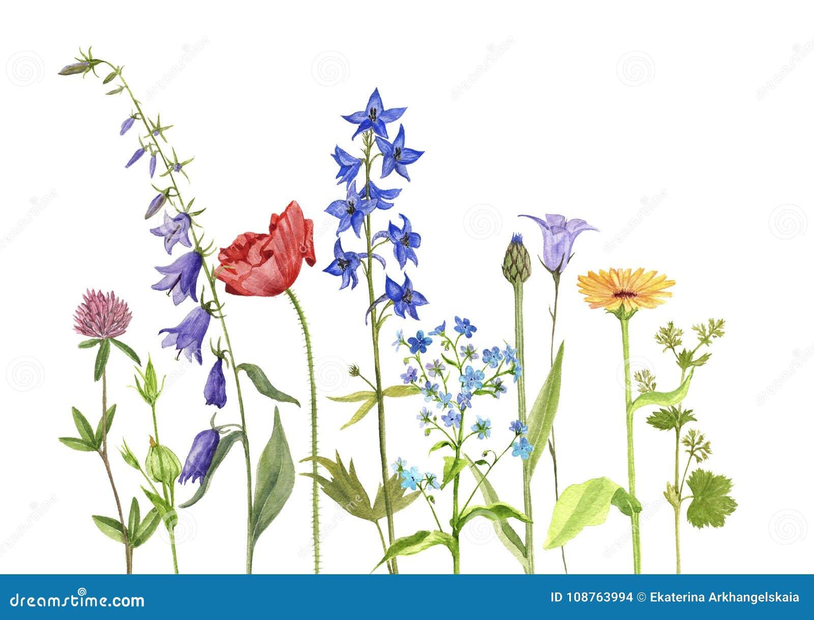 Aquarellzeichnungsblumen und -anlagen