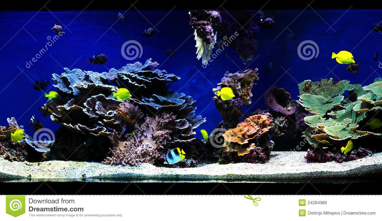 Aquarium royalty free stock images image 24284989 Aquarium free days