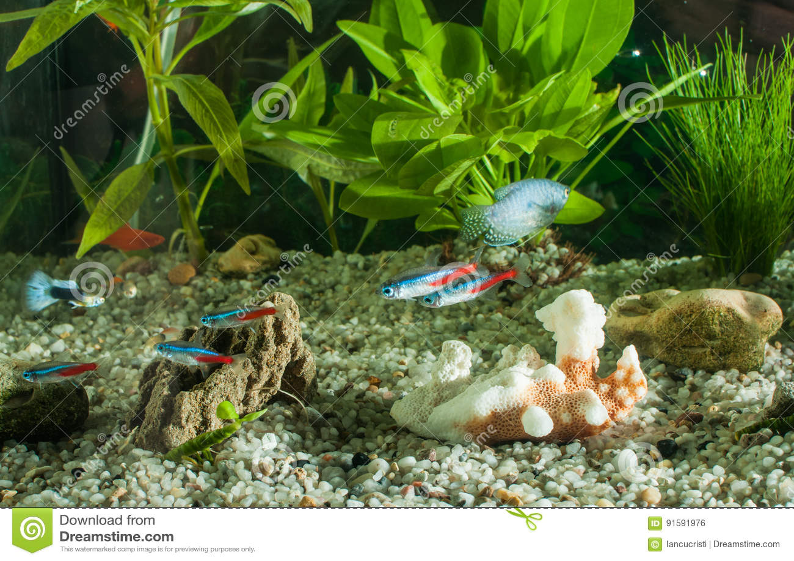 Aquarium avec des poissons des usines naturelles et des for Poisson et aquarium