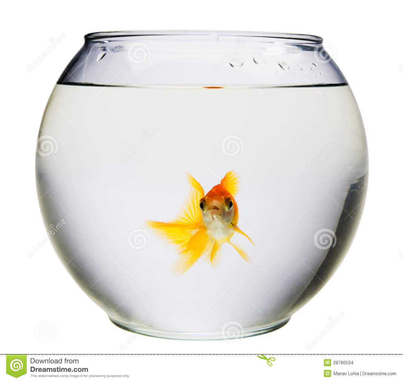 Aquarium avec le poisson rouge images stock image 28780534 for Aquarium poisson rouge taille