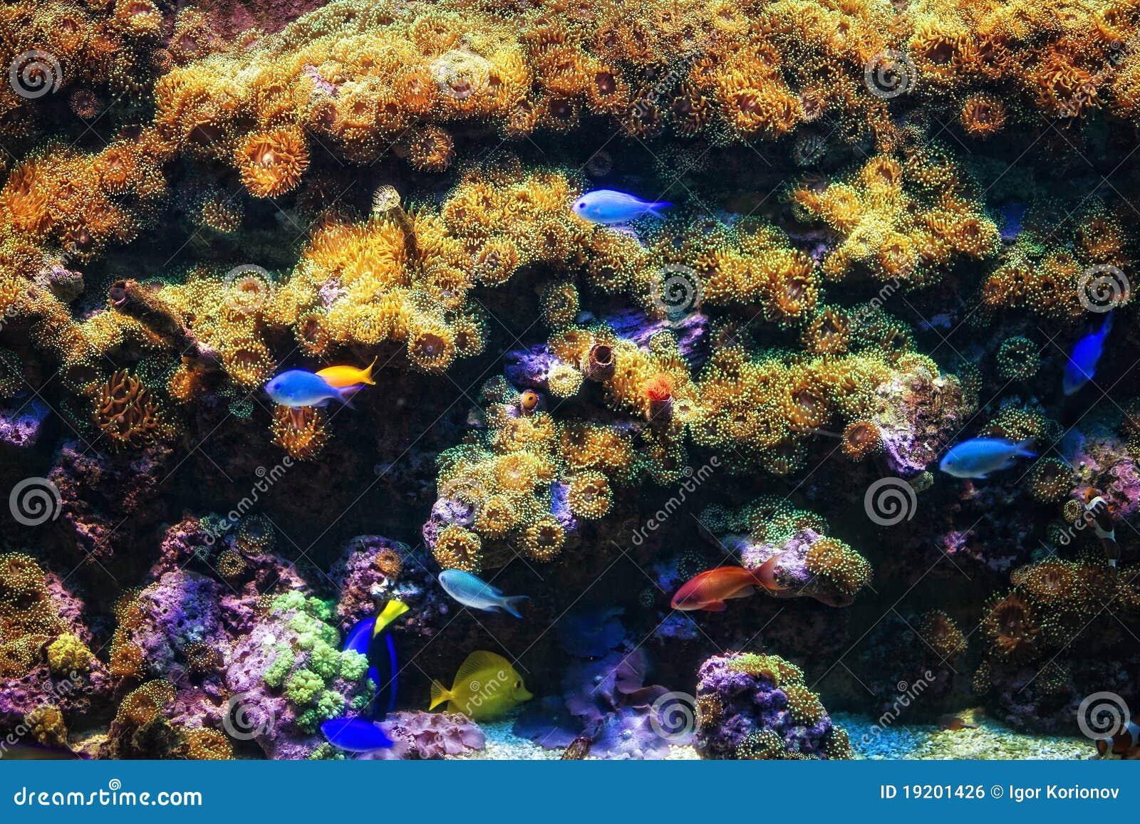 Aquarium avec les poissons tropicaux de corail et color s for Aquarium avec poisson