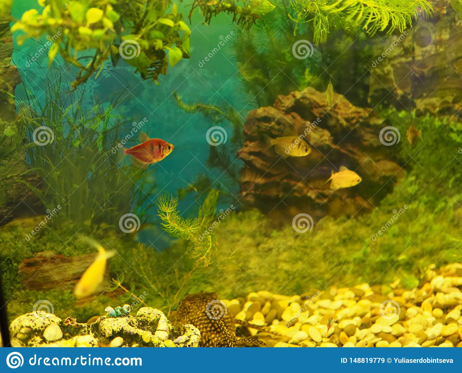 Aquarium colourfull vissen in donker diep blauw water