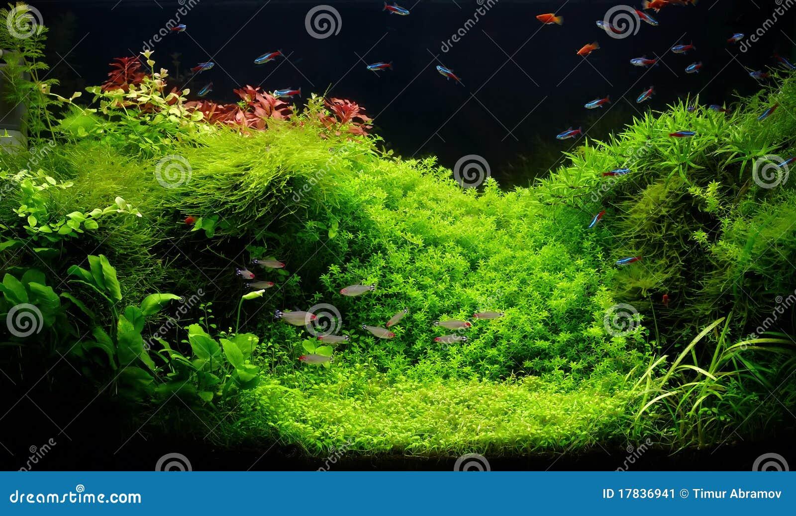 aquarium d 39 eau douce de nature dans le type de takasi amano image stock image 17836941. Black Bedroom Furniture Sets. Home Design Ideas