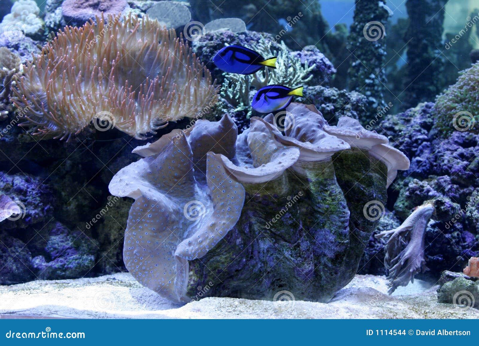 Aquarium de récif