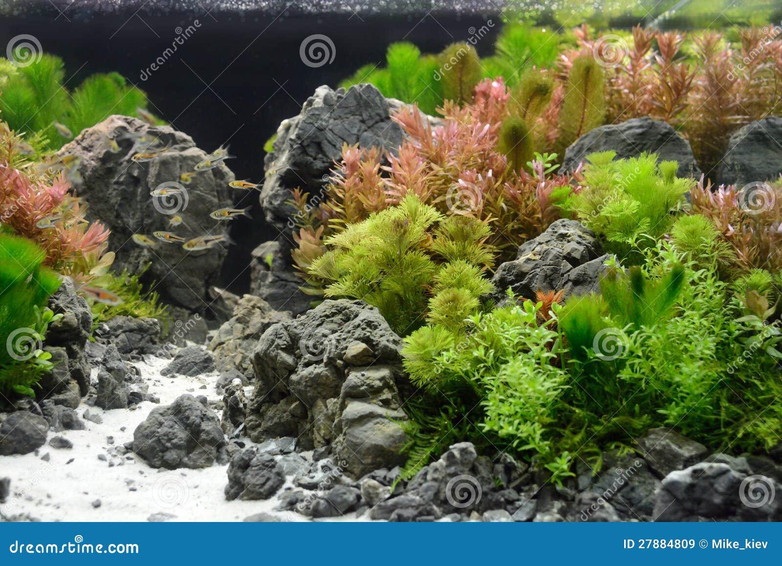 Decoration Aquarium Tropical  L