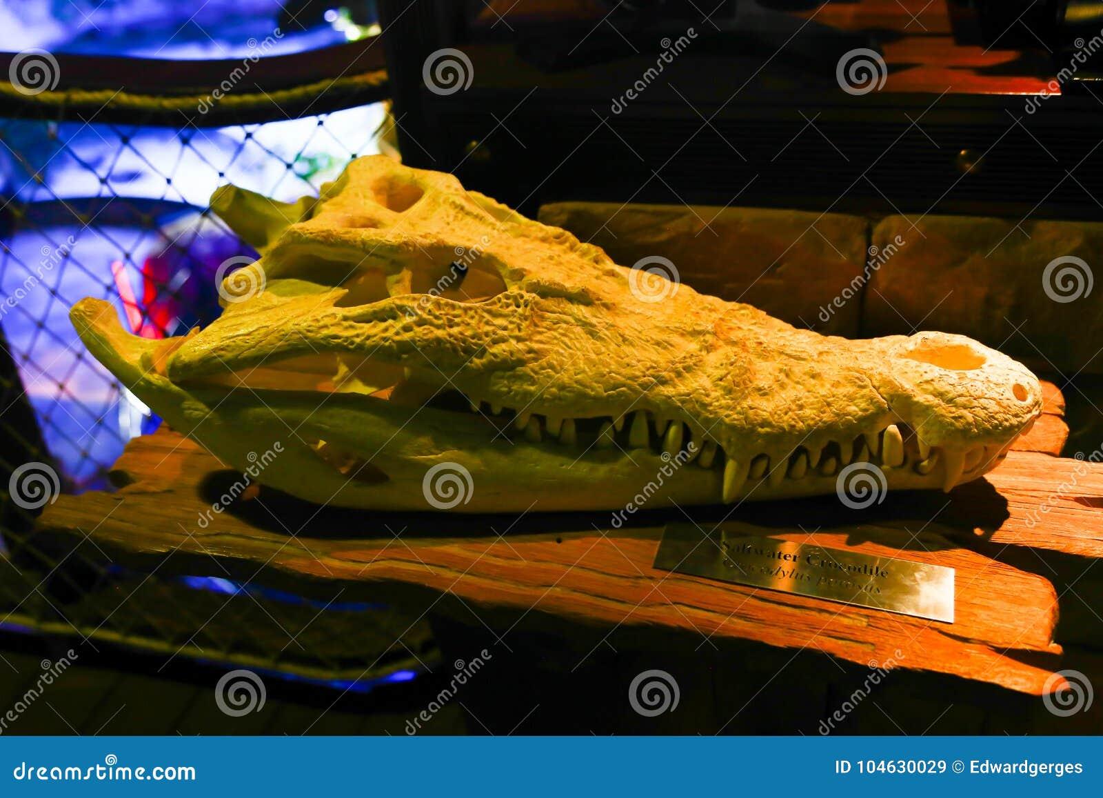 Download Aquarium Doubai stock afbeelding. Afbeelding bestaande uit netwerk - 104630029