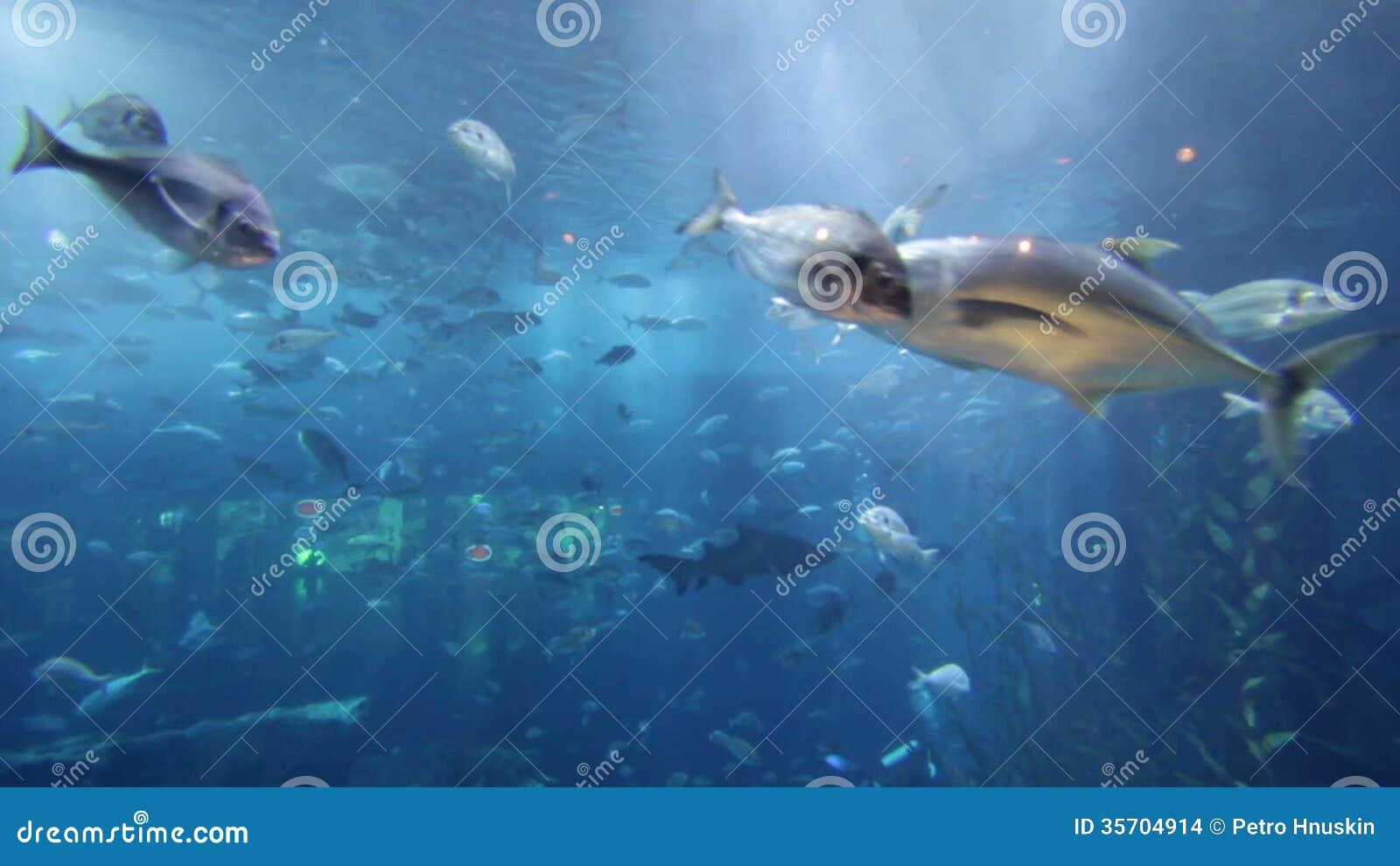 Board game aquarium video game dice dice png download 709*709.