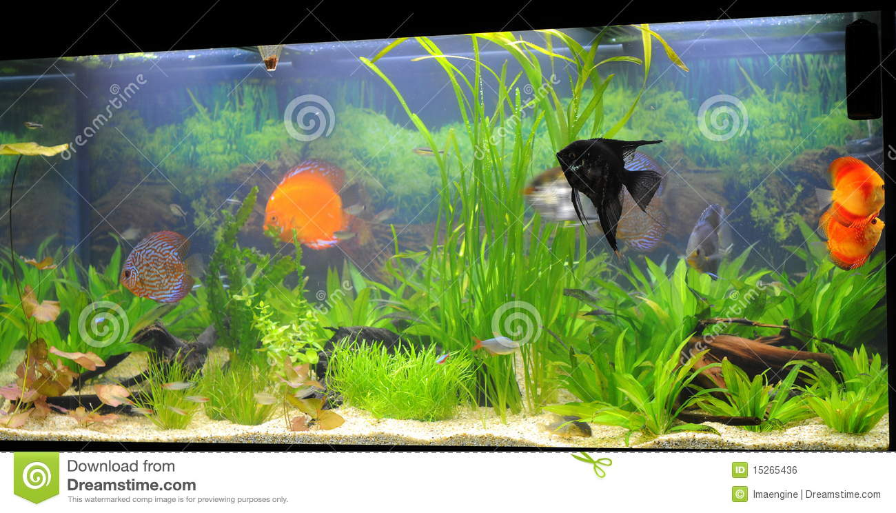 Aquarium Exotic Fish Species Stock Photo Image Of Amazonian