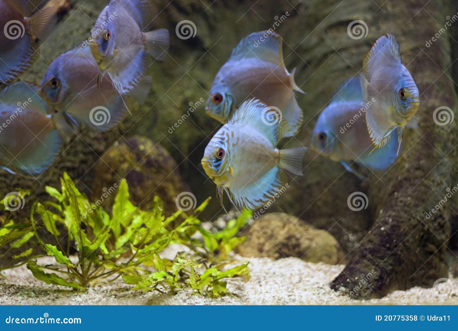 Aquarium Exotisch En Tropisch Met Vissen Royalty vrije Stock Foto u0026#39;s   Afbeelding  20775358