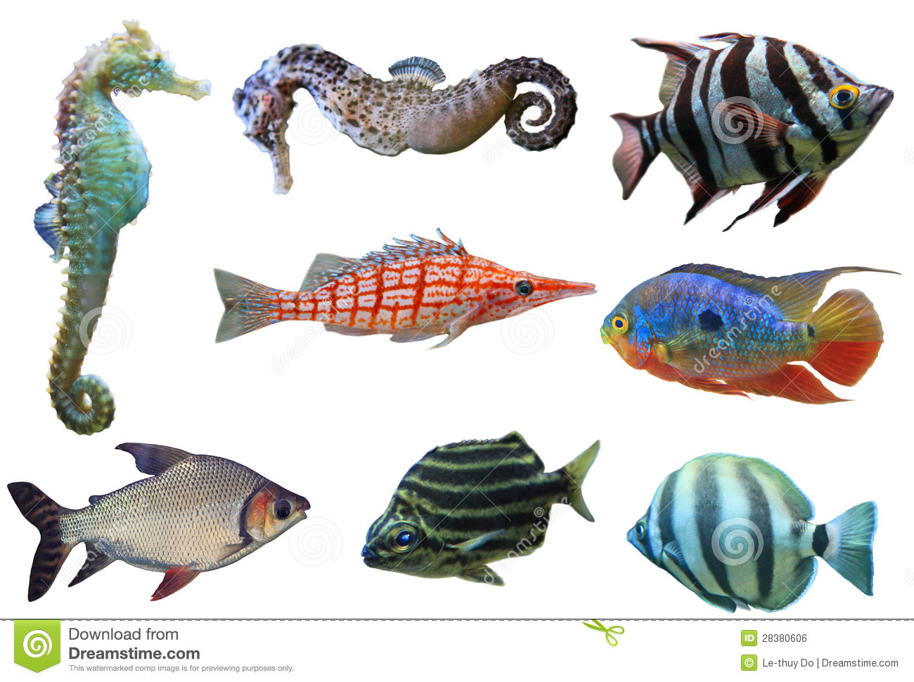 Aquarium Fish Royalty Free Stock Image - Image: 28380606