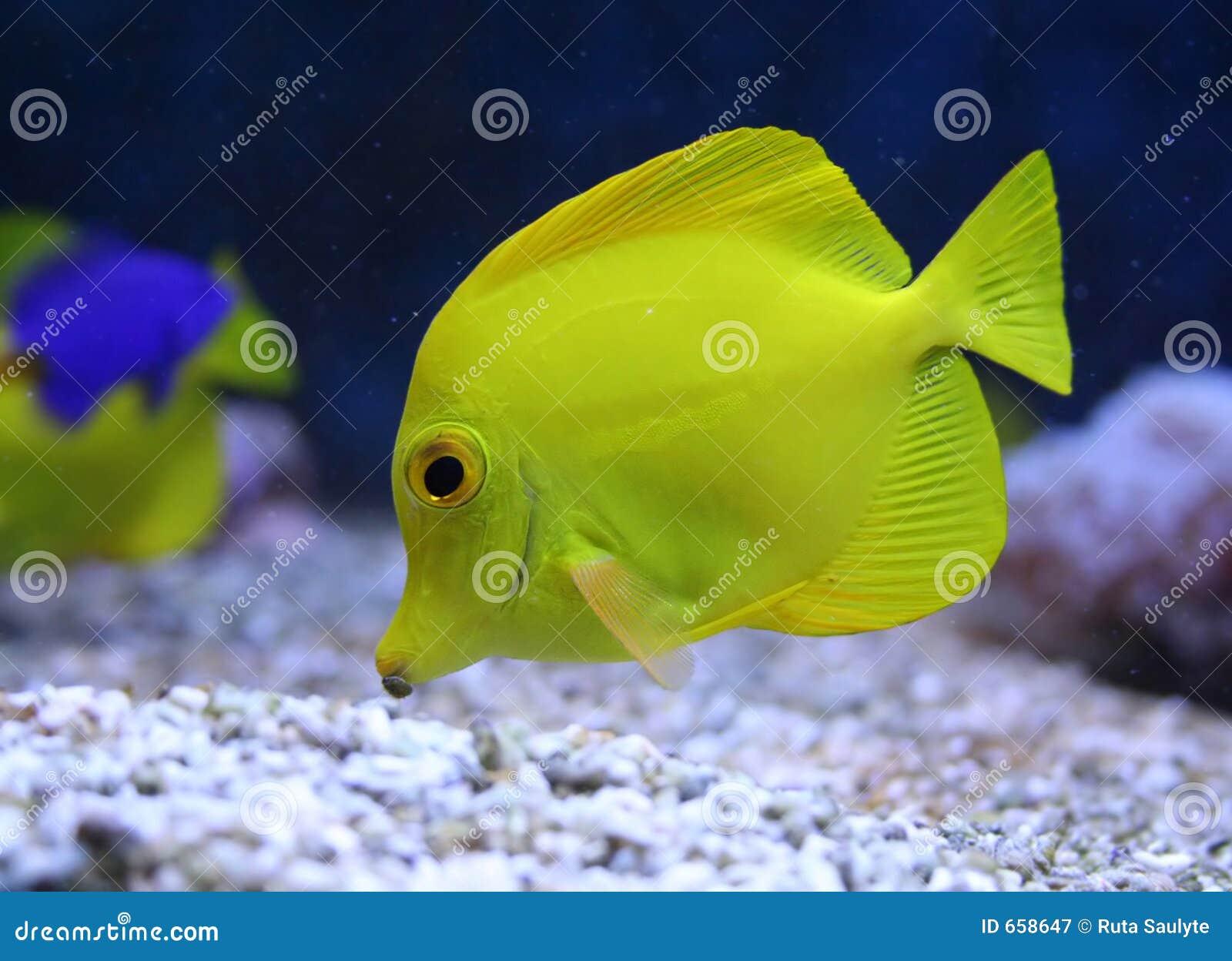 aquarium fish royalty free stock photography image 658647