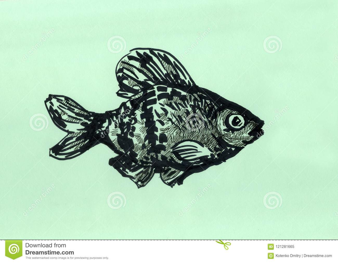 Aquarium Fish Barbus Illustration For Website Stock Illustration