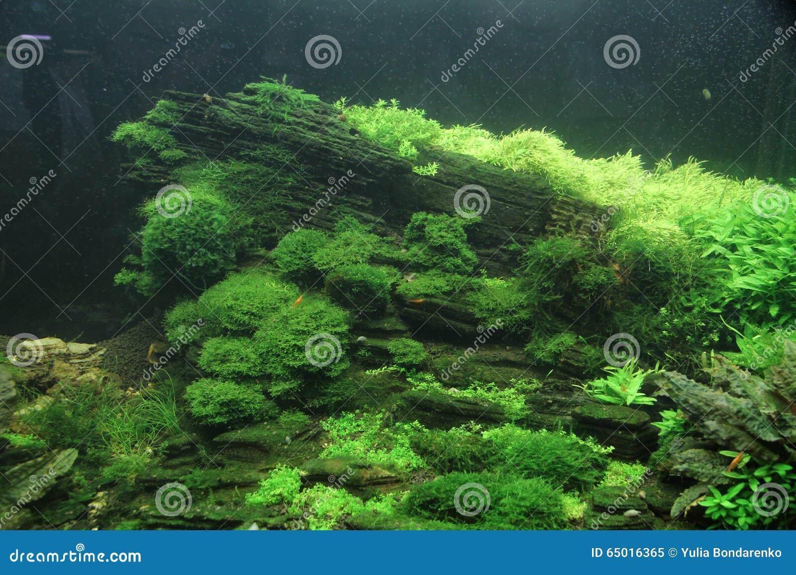 Aquarium fish in a beautiful green landscape