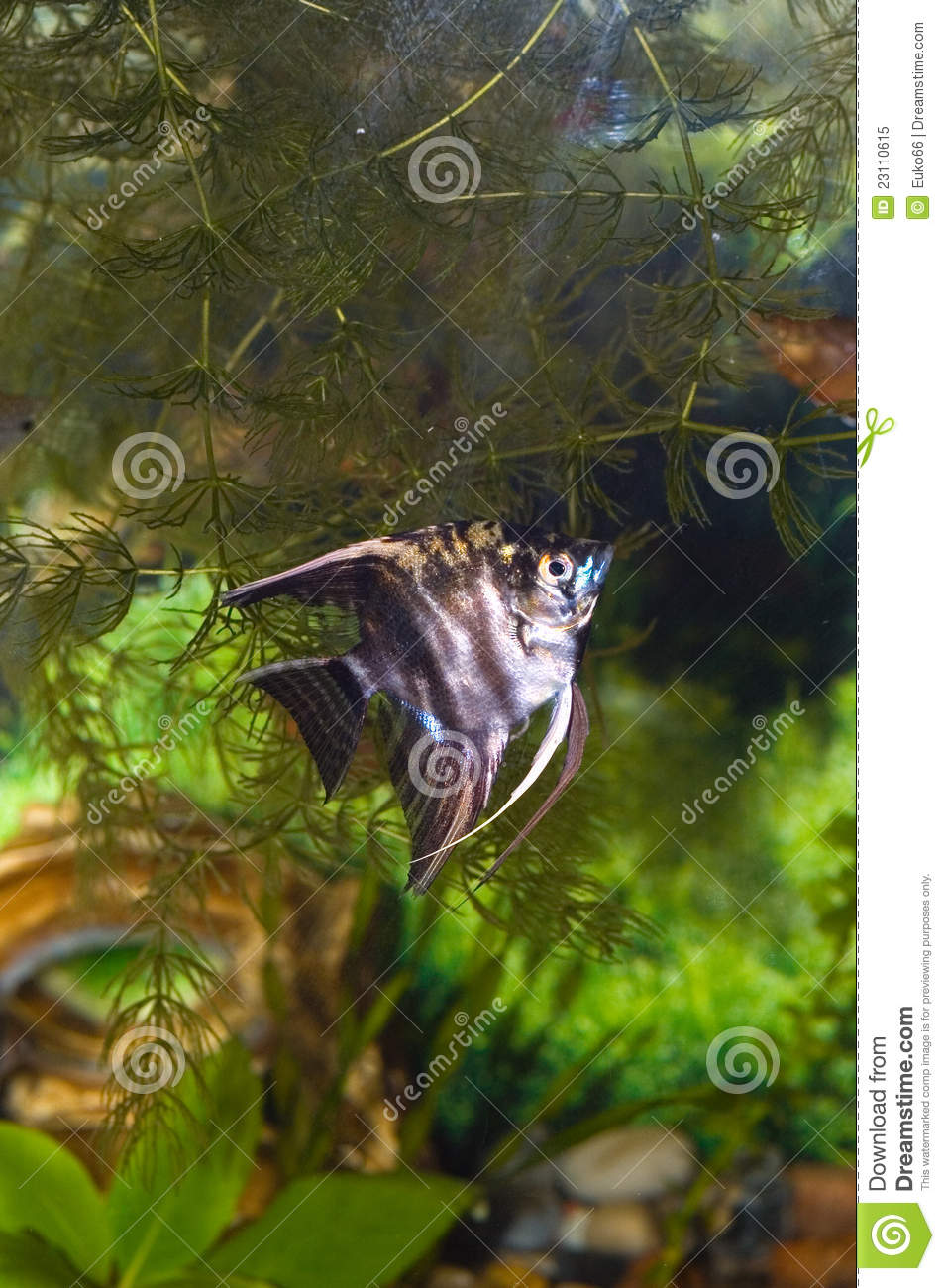 Aquarium With Fish. Green Theme Royalty Free Stock Photo - Image ...