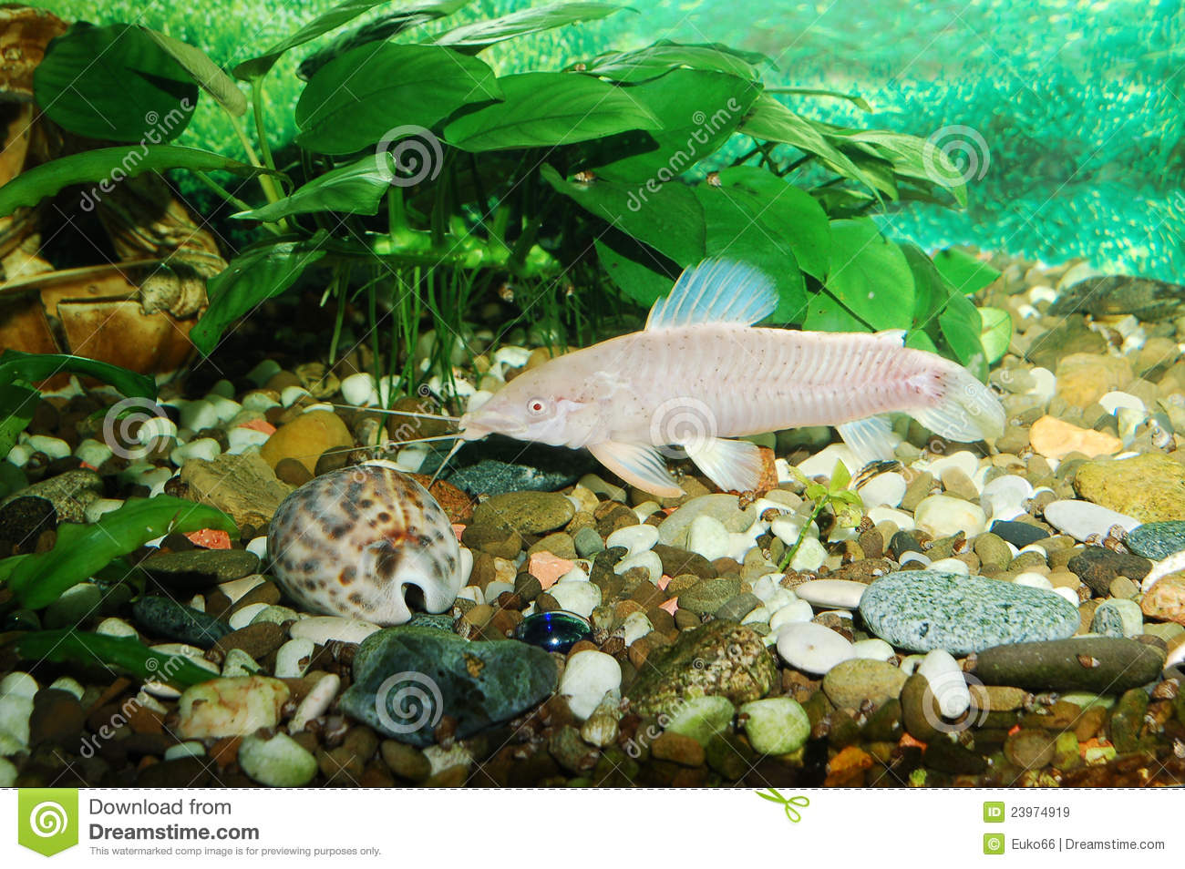 Aquarium With Fish. Green Theme Royalty Free Stock Images - Image ...