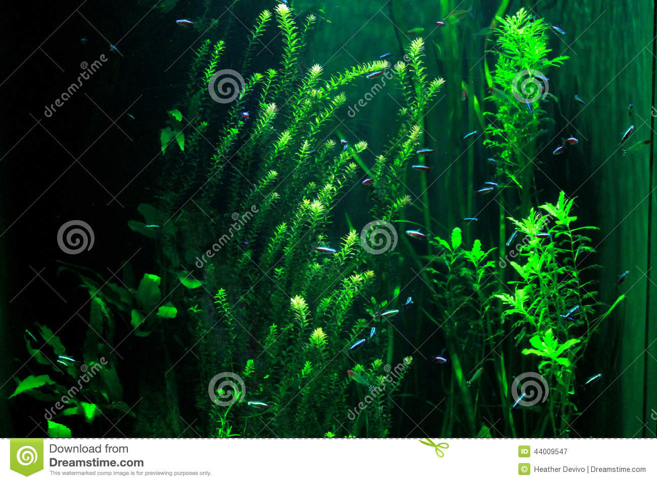 ... colored, tiny aquarium fish in a predominantly green environment
