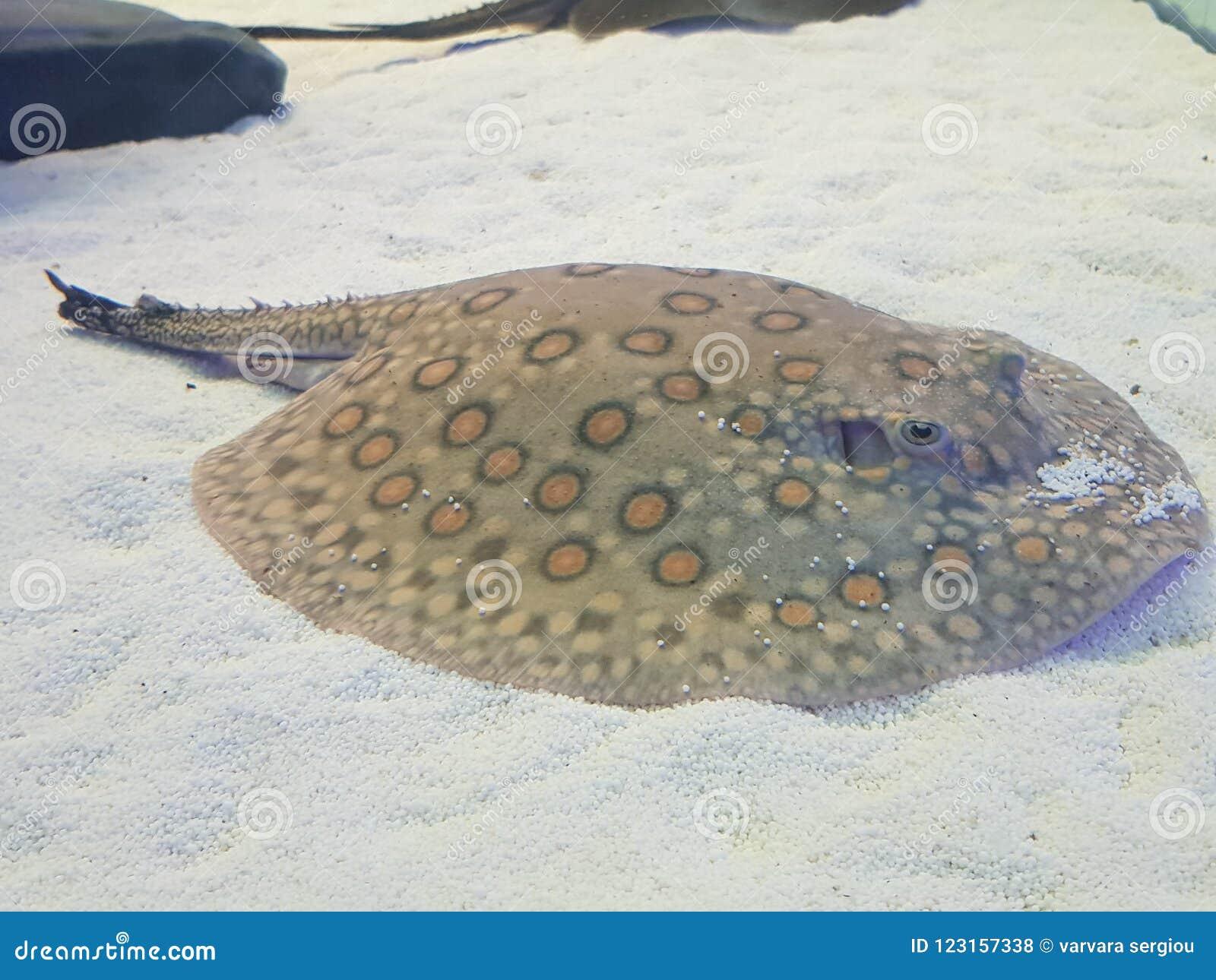 Weird Fish Stock Photo Image Of Tank Fish Weird Aquarium 123157338