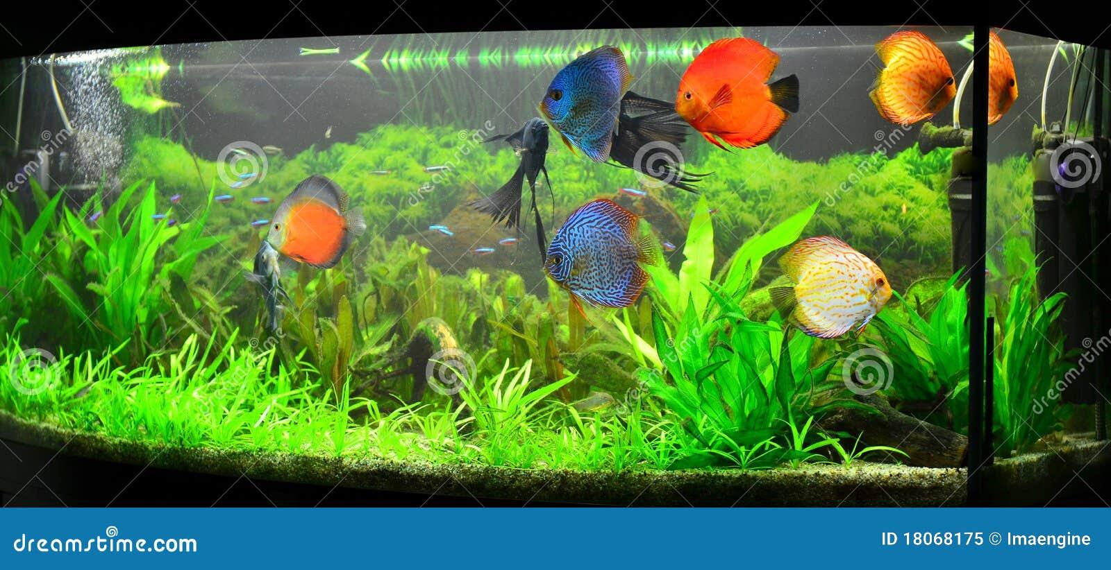Aquarium la maison avec des poissons et des centrales de for Aquarium a la maison pdf