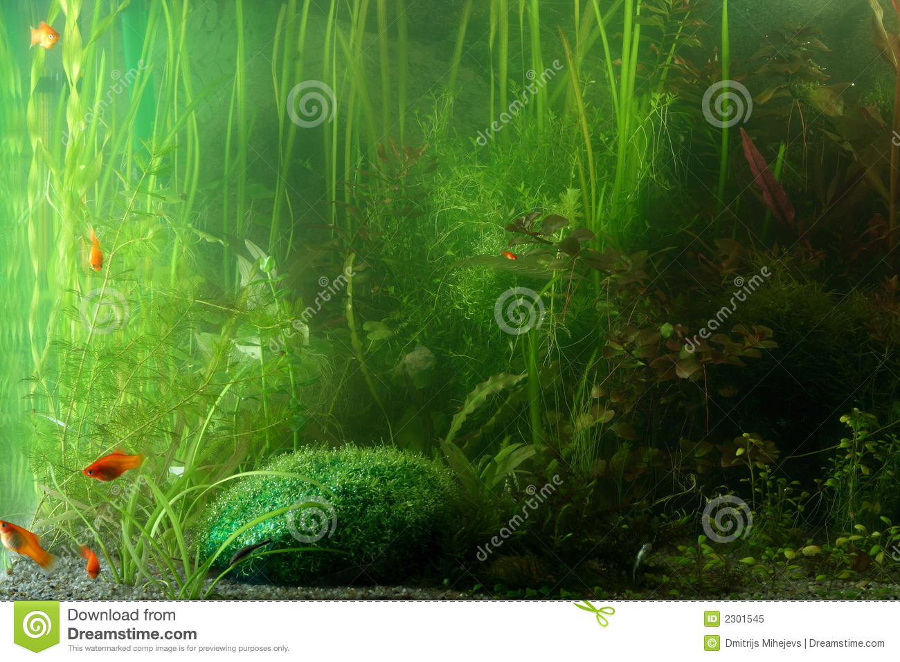 Aquarium landscape royalty free stock photo image 2301545 Aquarium landscape