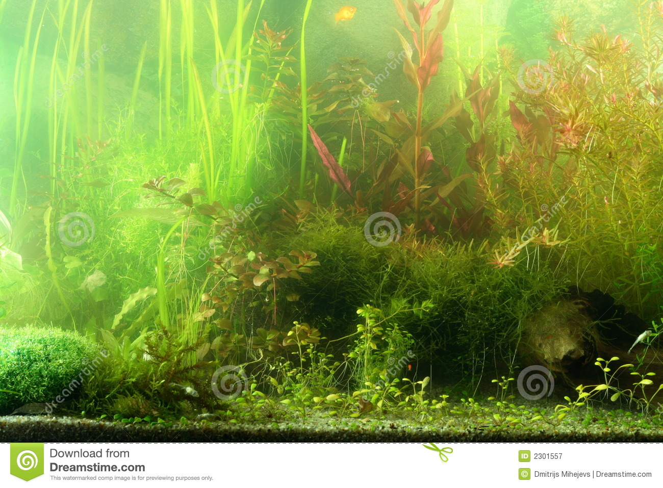 Aquarium landscape royalty free stock photography image Aquarium landscape