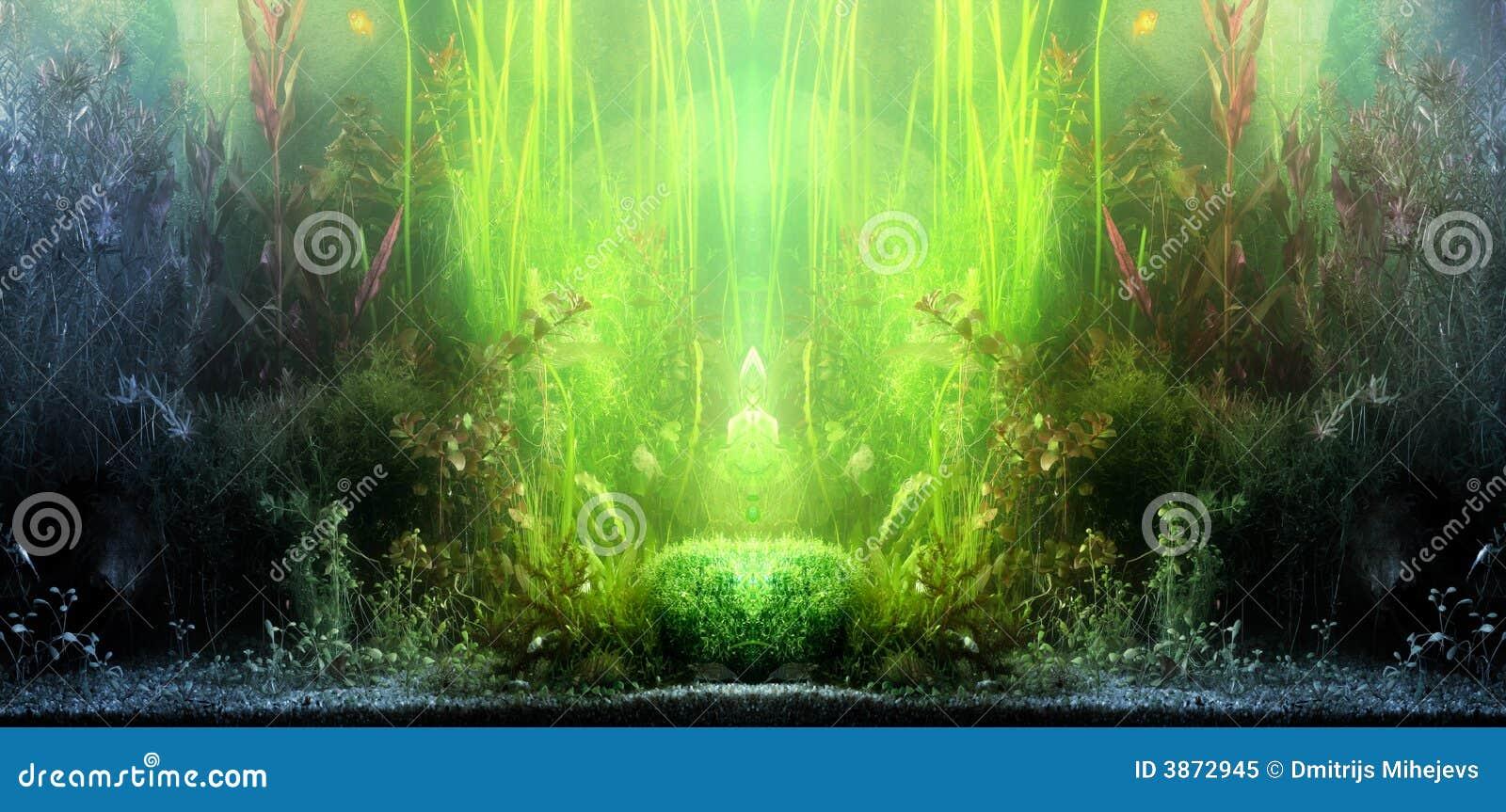 Aquarium landscape stock image image of climate jungles Aquarium landscape