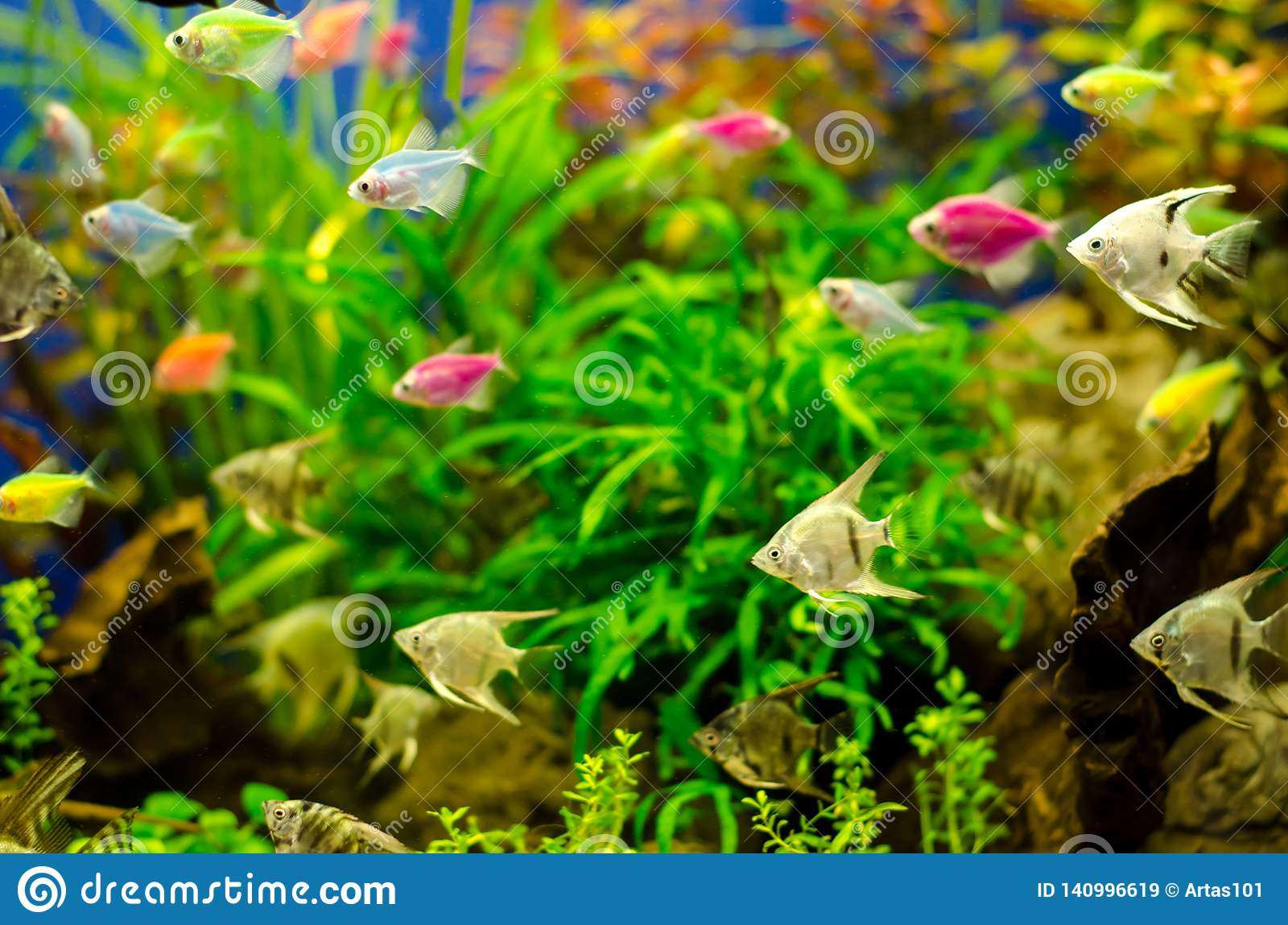 Aquarium with many colored fish
