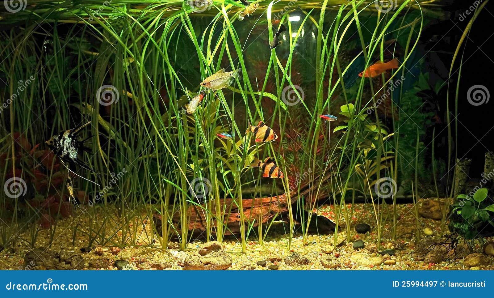 Fish for natural aquarium - Aquarium With Many Fish And Natural Plants 120 L