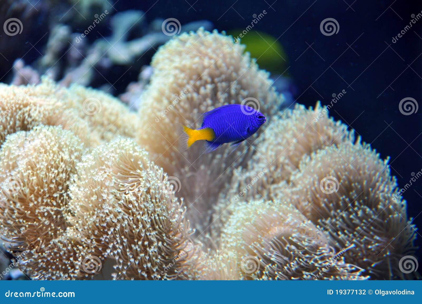 Aquarium marin avec un poisson bleu photographie stock for Aquarium avec poisson