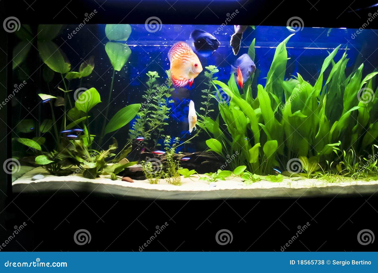 Aquarium Met Sommige Tropische Fisches Royalty vrije Stock Foto u0026#39;s   Afbeelding  18565738