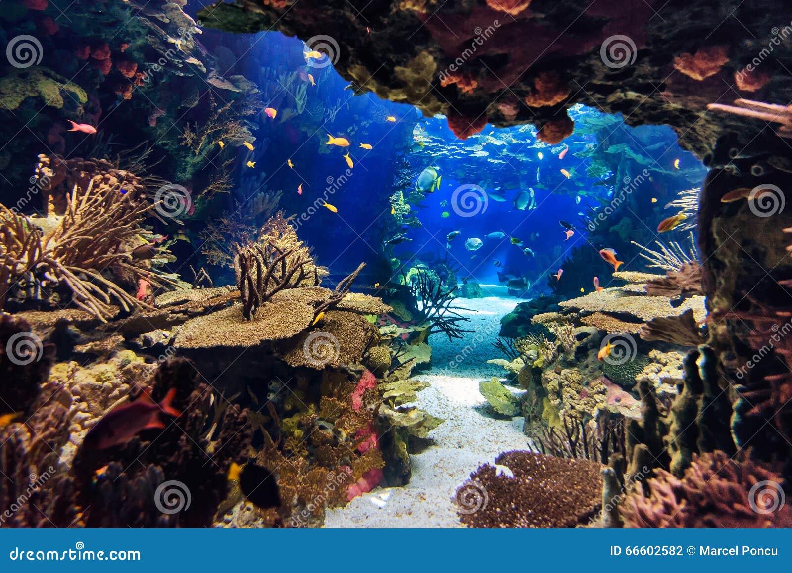 Aquarium Met Vissen, Voor Achtergrond Stock Foto   Afbeelding  66602582