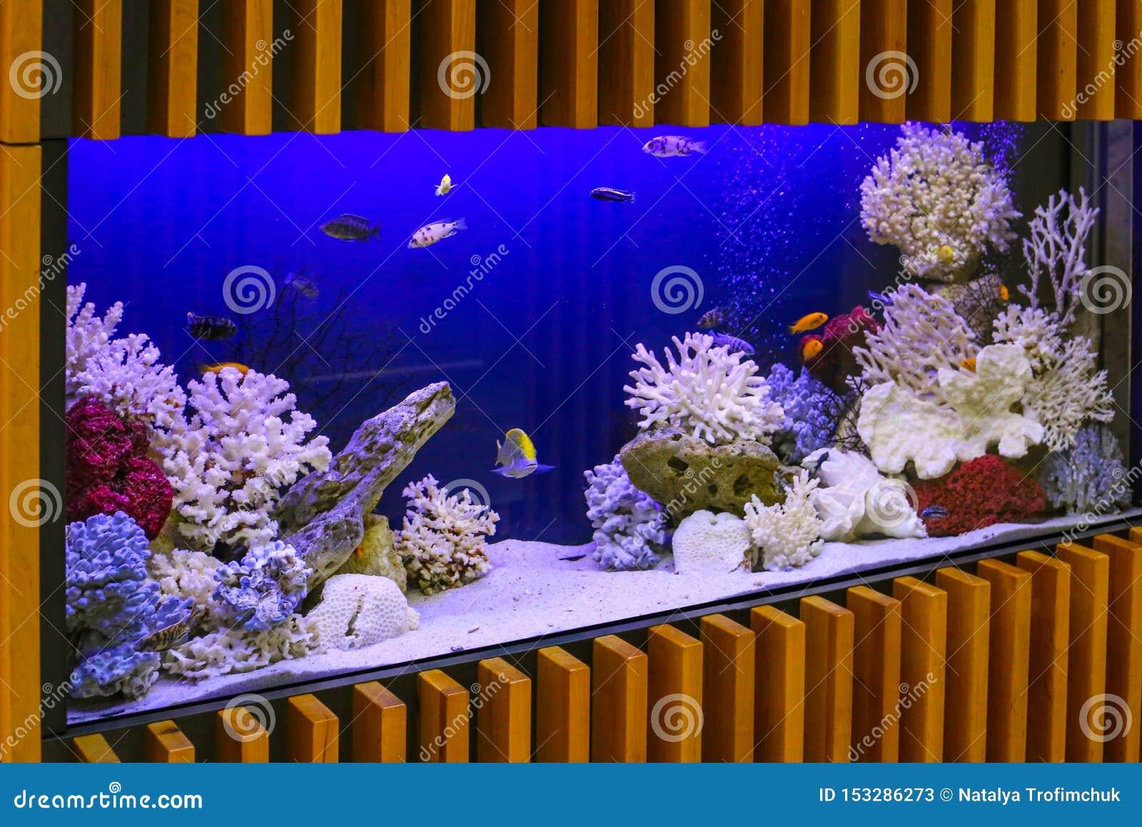 Aquarium mit Anlagen und tropischen bunten Fischen