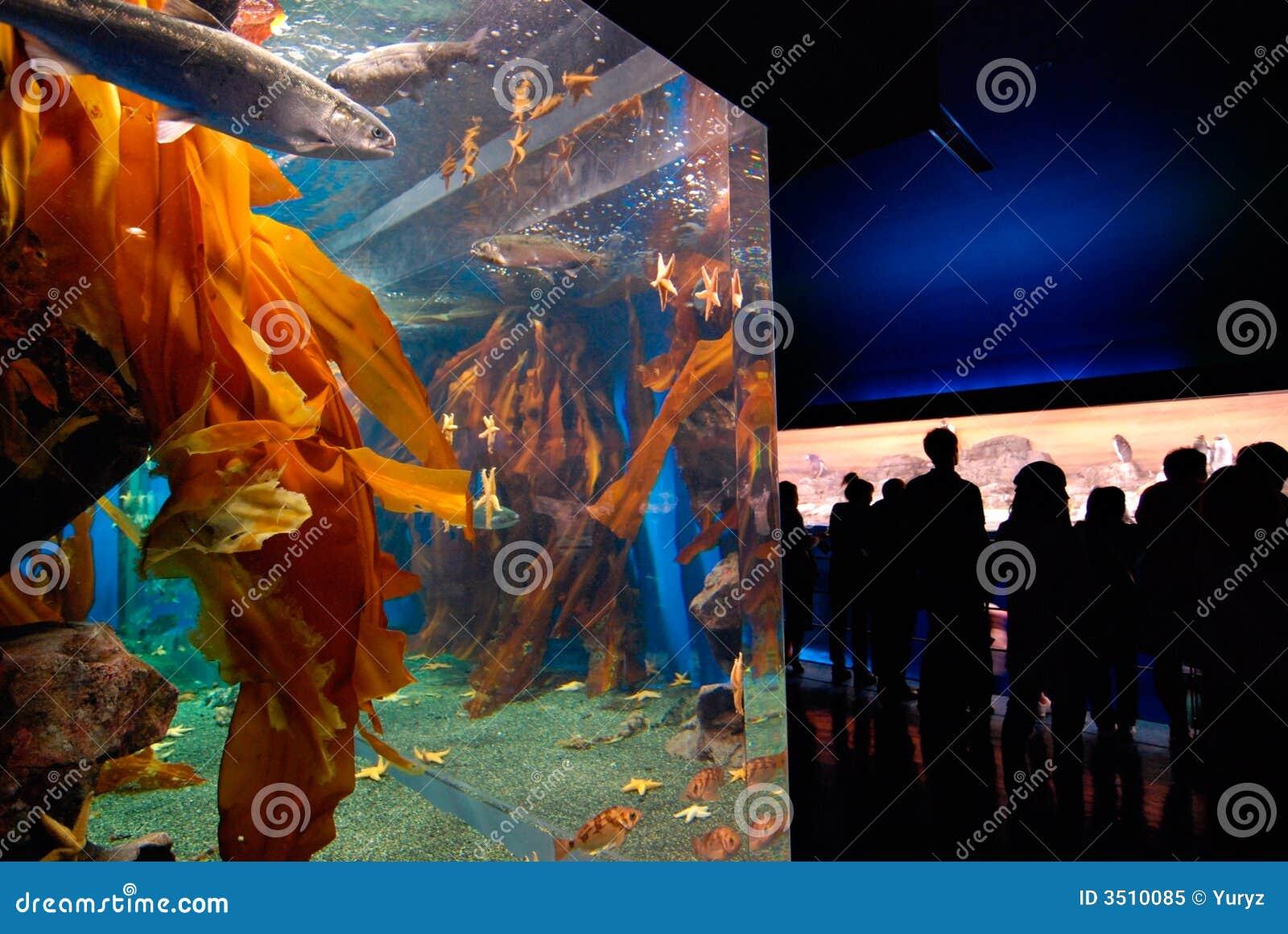 Aquarium and public