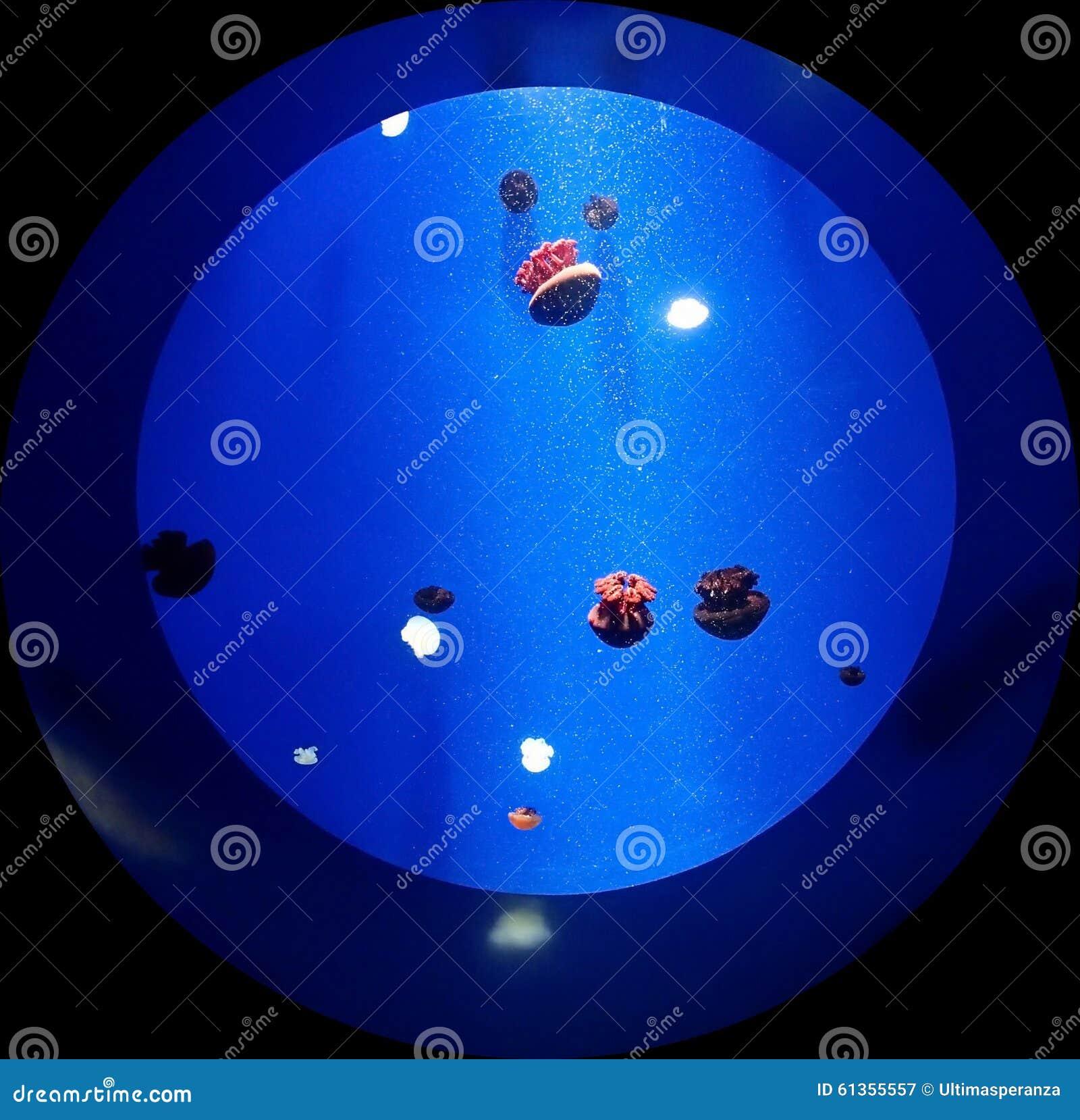 Aquarium rond avec des m duses photo stock image 61355557 for Achat aquarium rond