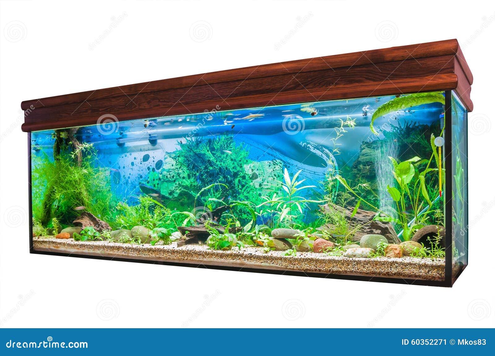 Aquarium sur le fond blanc photo stock image 60352271 for Fond aquarium