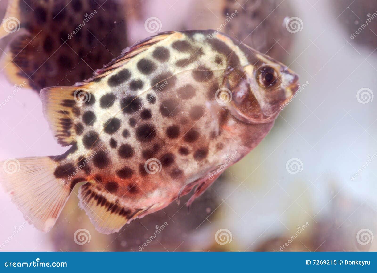 Aquarium tropical fish stock image. Image of water, fish - 7269215