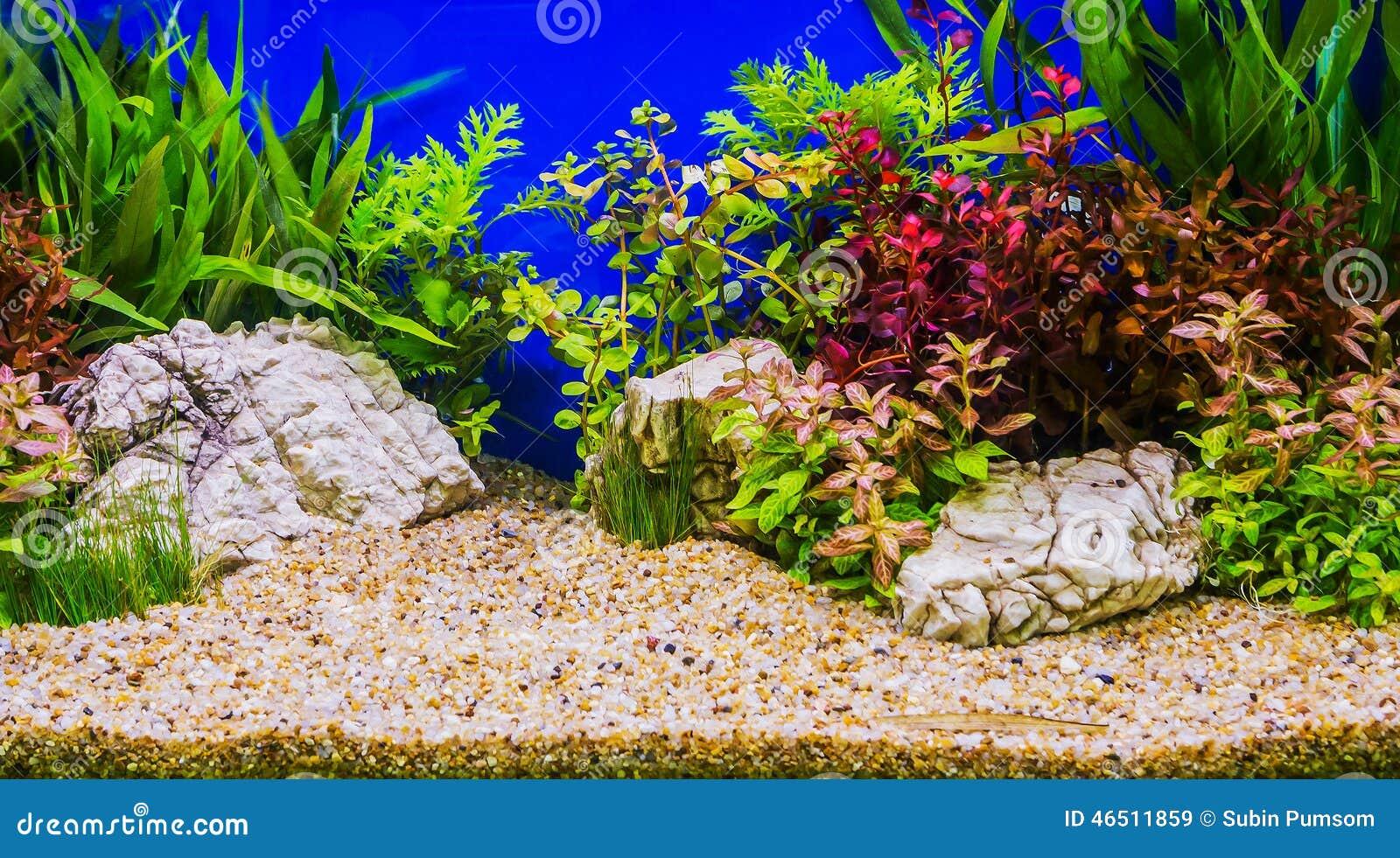 Sfondi acquario acqua dolce casamia idea di immagine for Acquario acqua dolce