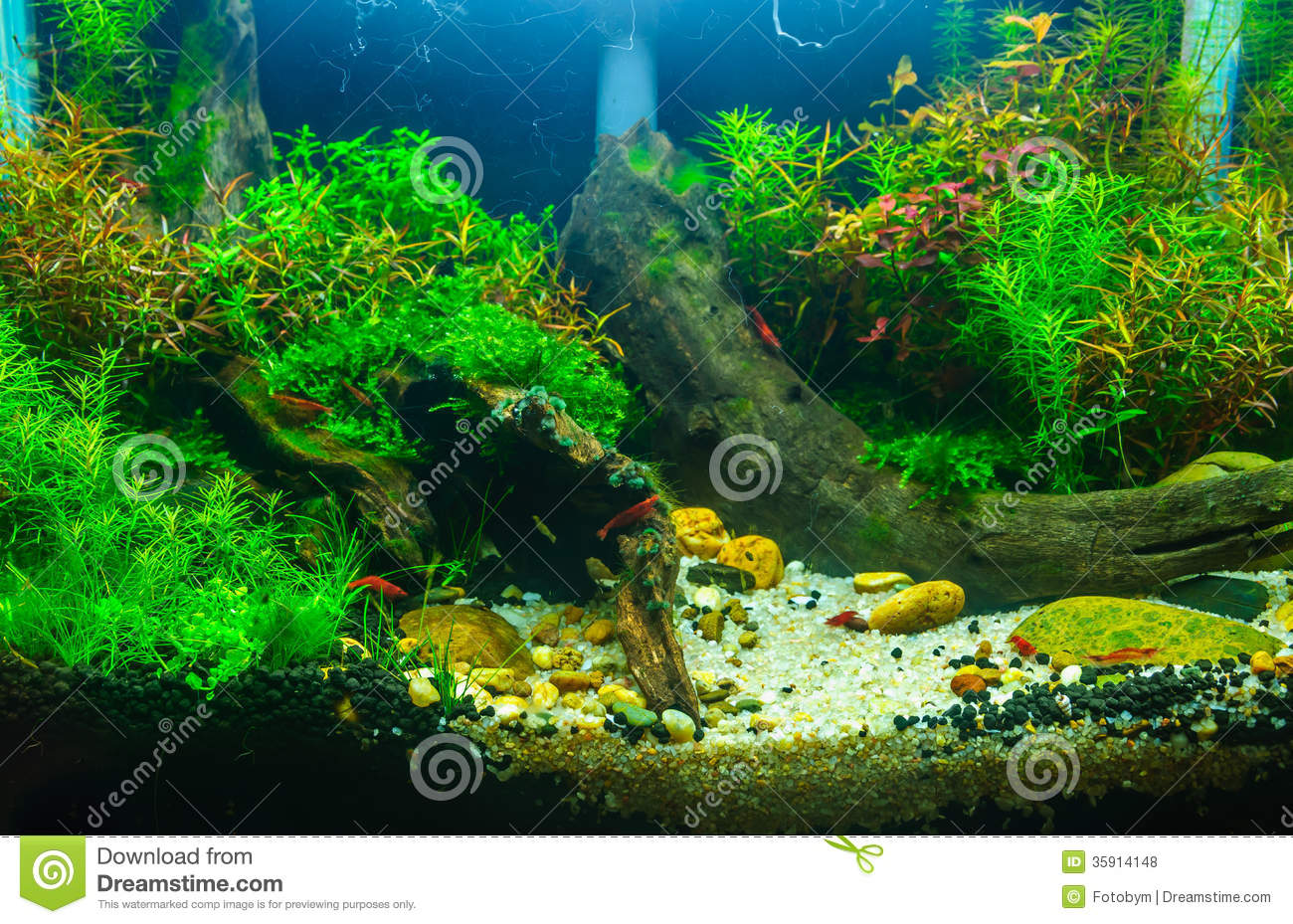 Aquascaping Of The Planted Aquarium Stock Photo Image 35914148