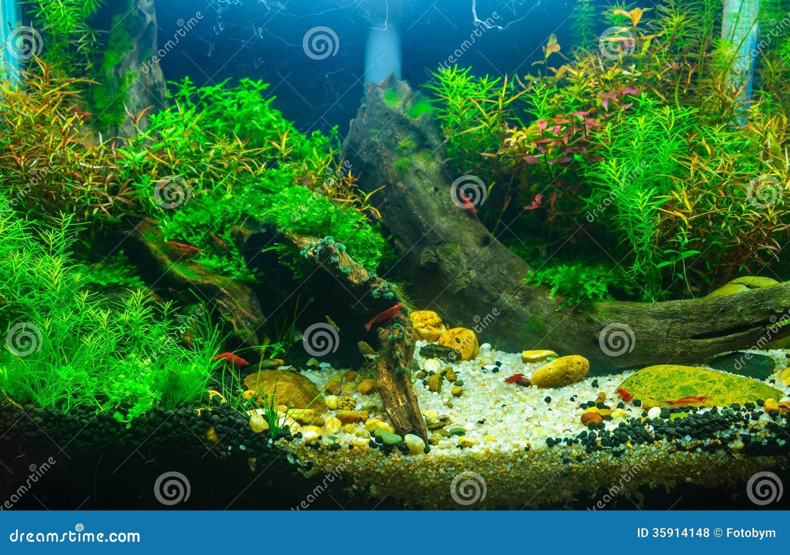 Aquascaping Of The Planted Aquarium Royalty Free Stock Photos Image 35914148