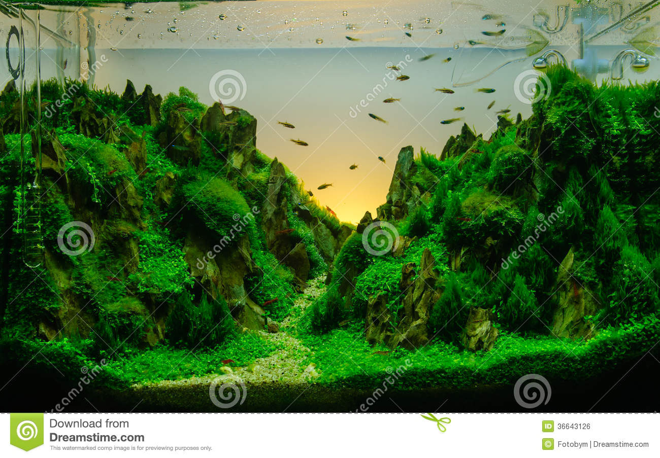 Aquascaping Of The Planted Aquarium Royalty Free Stock Image Image 36643126