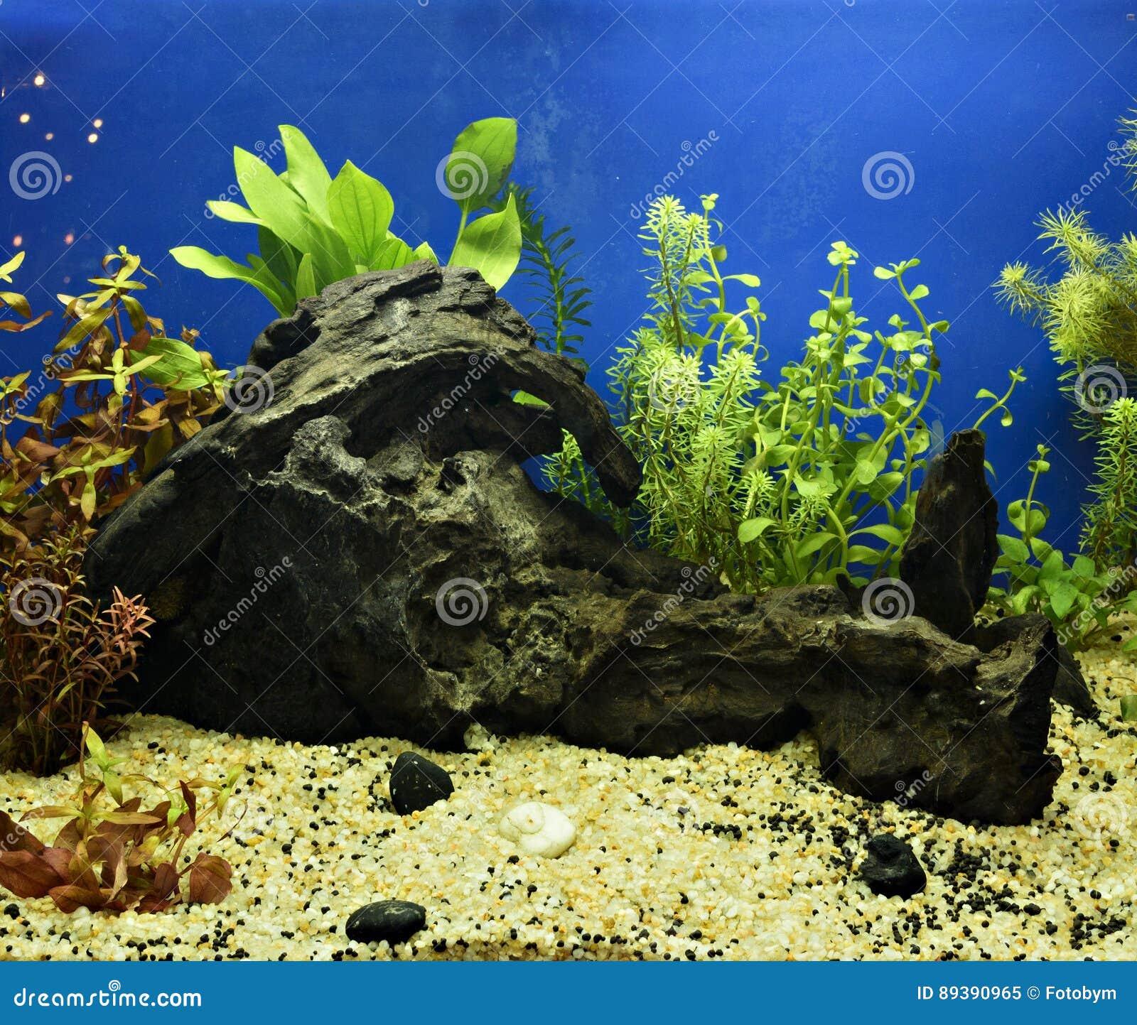 Aquascaping Of The Planted Aquarium Stock Image Image Of Aquascaping Fresh 89390965