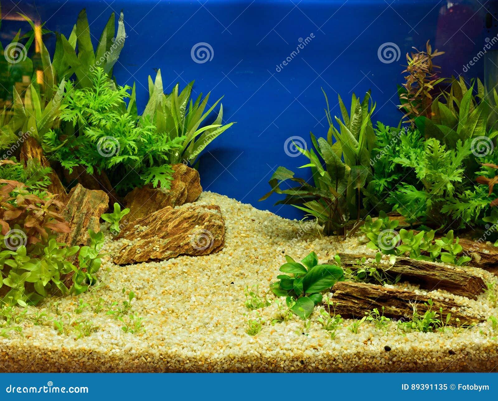 Aquascaping Planted Aquarium Stock Images - Download 59 ...