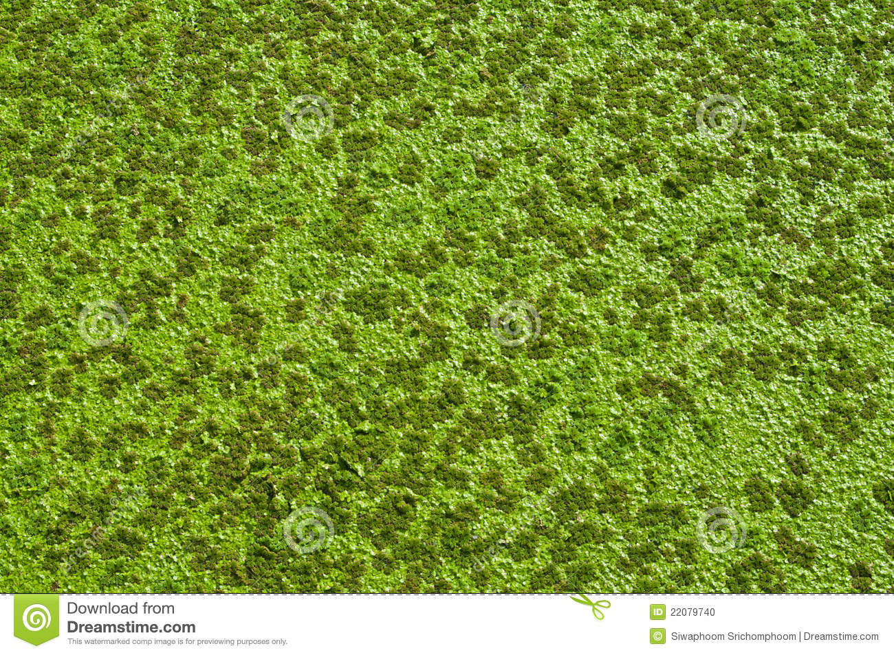 aquatic weeds