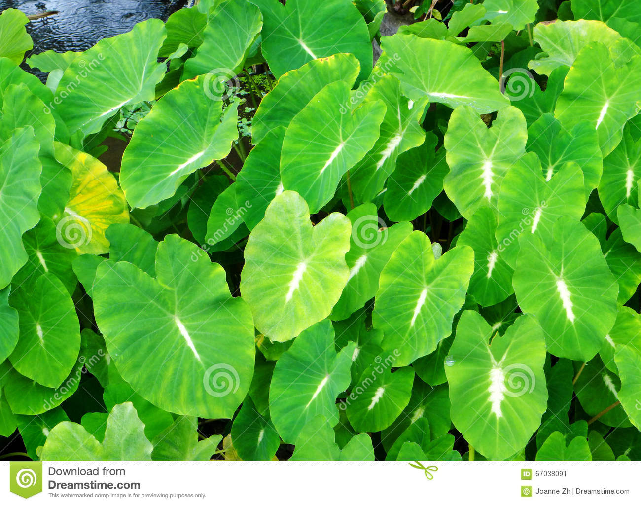 Aquatic Plants With Common Names | www.pixshark.com ...