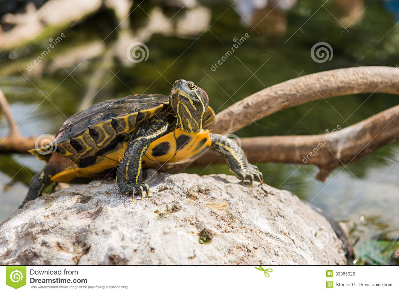 Aquatic turtle from the oceanographic of the City of Arts and Sciences ...