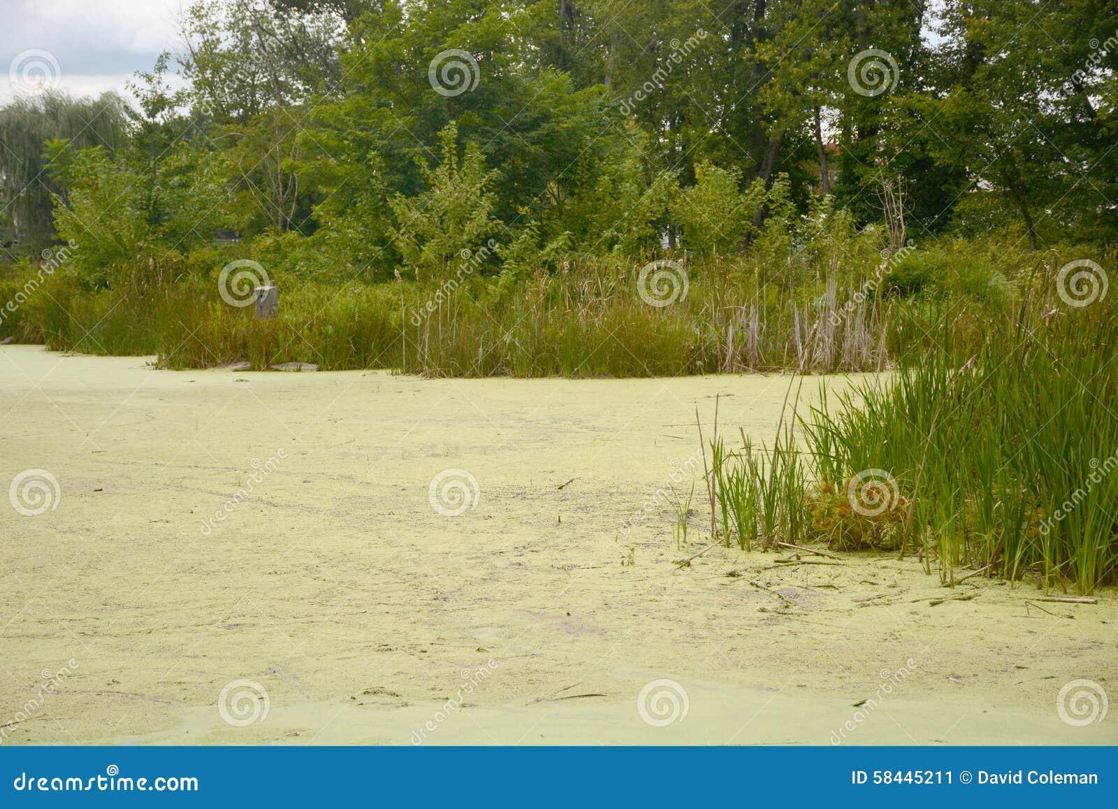 Aquatische vegetatie