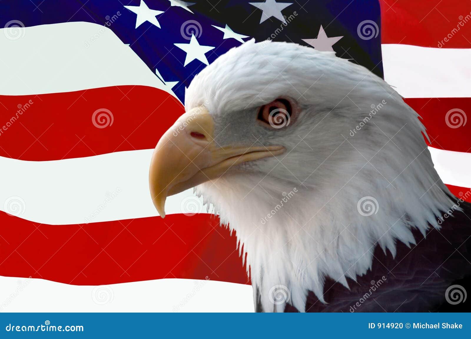 Aquila calva americana con la bandierina