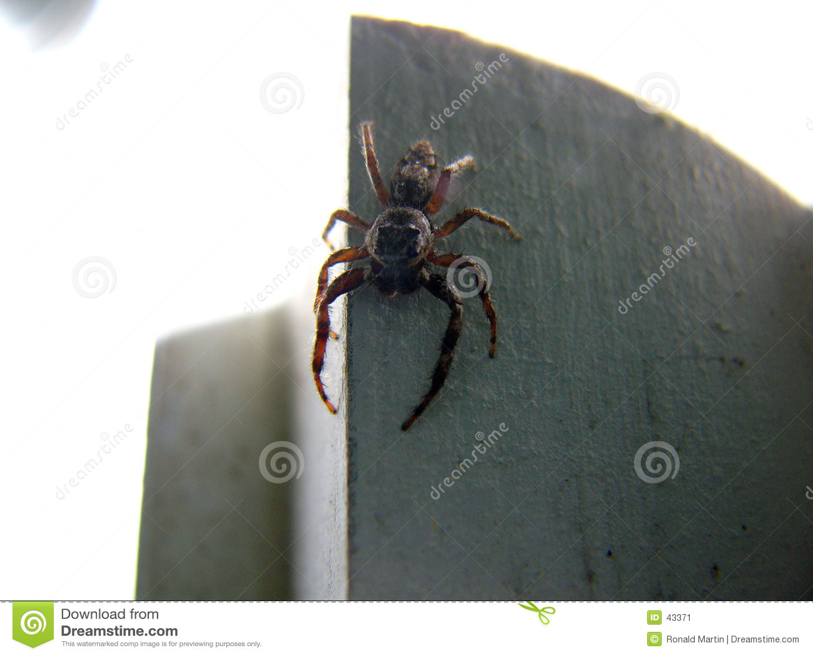 Download Araña asustadiza 2 imagen de archivo. Imagen de insectos - 43371